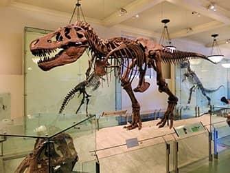 미국 자연사박물관 - 공룡