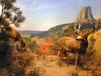 미국 자연사박물관 - 포유류관2