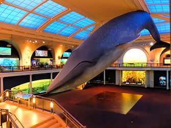 미국 자연사박물관 - 해양생태계관