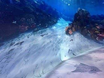내셔널 지오그래피 인카운터 오션 오딧세이 - 물속